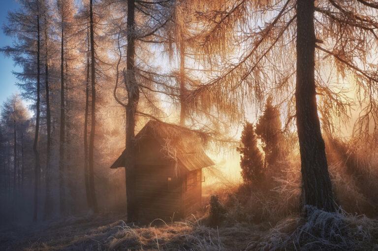 W magicznym lesie 02 1