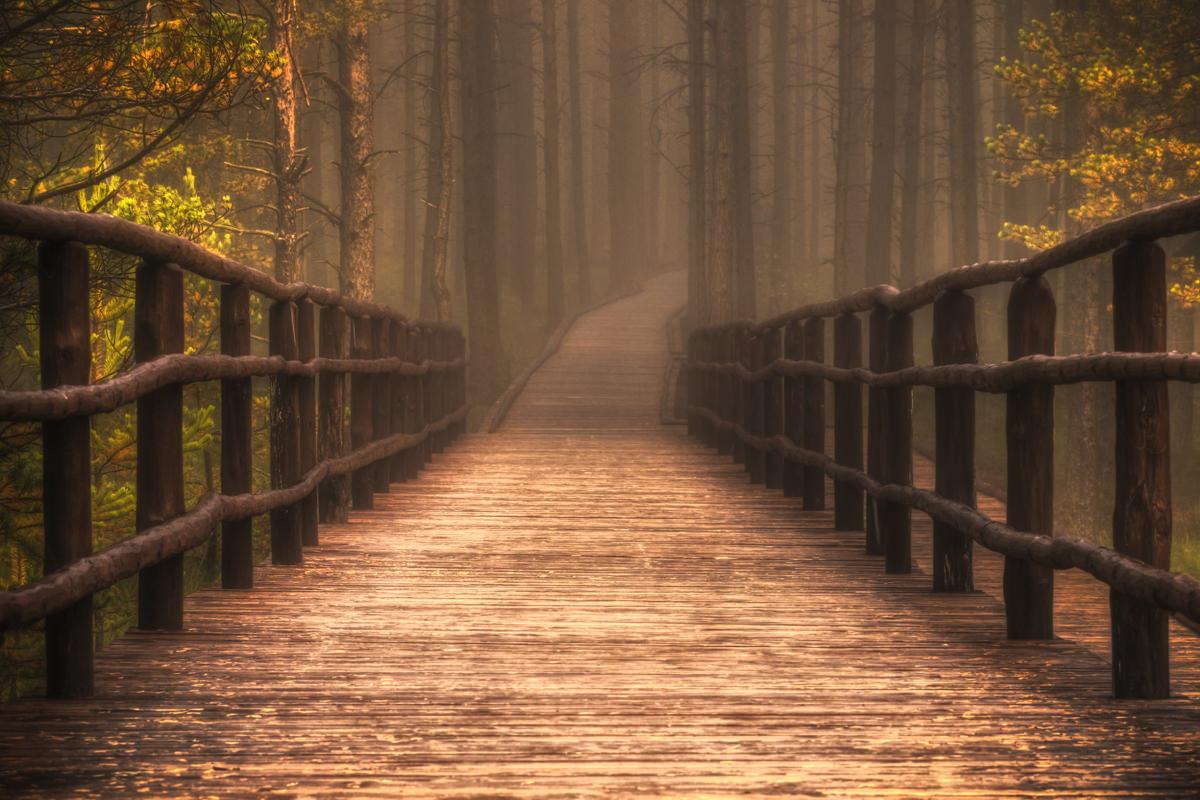 rezerwat bor na czerwonem, nowy targ, las w nowym targu, lotnisko nowy targ, fotografia lasu, marcin kesek, fotograf krajobrazu marcin kesek, polskie krajobrazy,