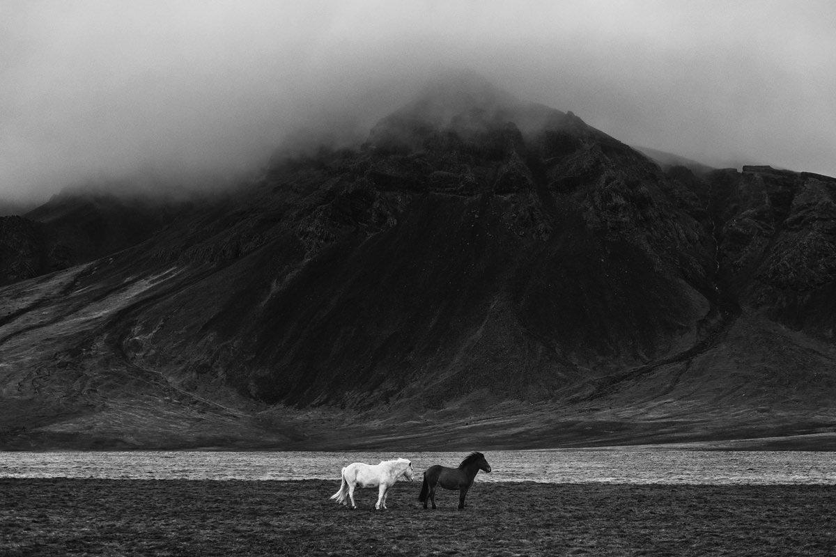 fotografia czarno biala, marcin kesek fotograf, czarno biale zdjecia krajobrazowe, wydruki krajobrazowe, konie na islandii, islandia fotografia, fotografia konna, konie, fotograf koni, ekskluzywne zdjecia, artystyczne zdjecia