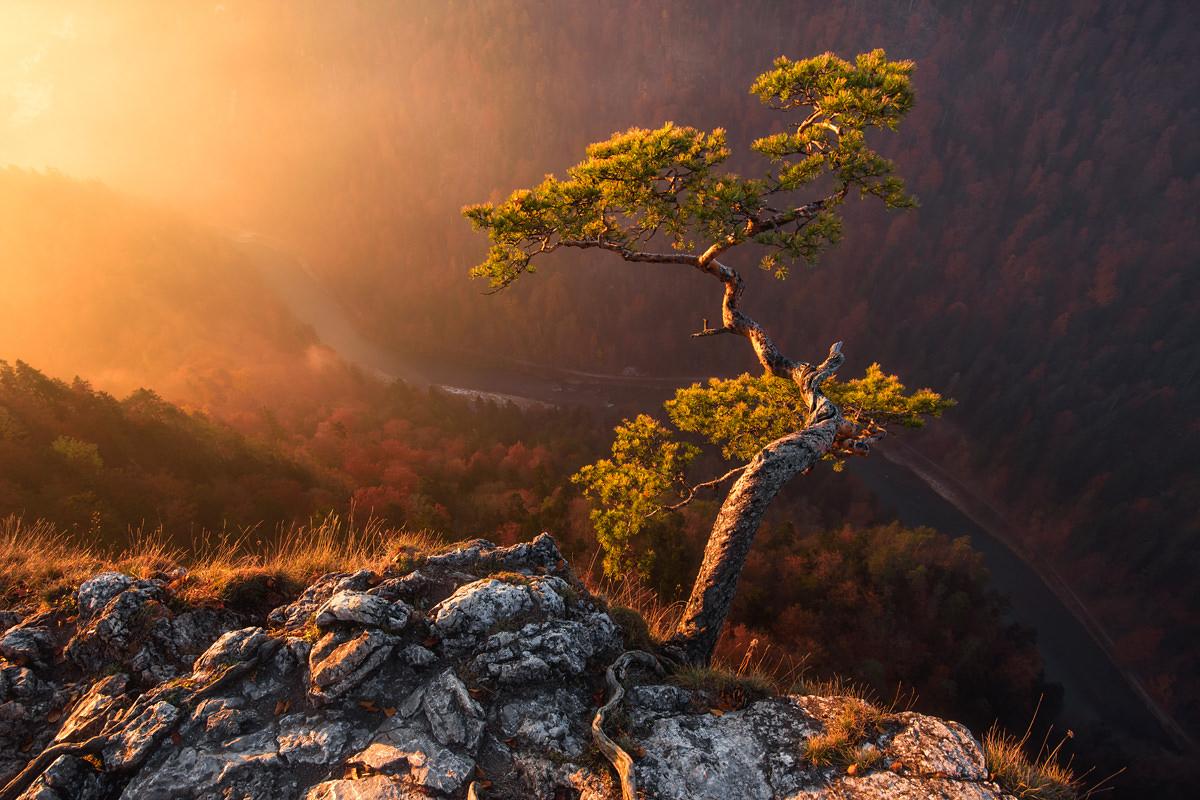 marcin kesek fotograf krajobrazu, fotografia krajobrazowa, wydruki krajobrazow, pieniny sokolica, kinga pieninska, drzewo na sokolicy, pieniny, krajobraz pienin, w pieniny