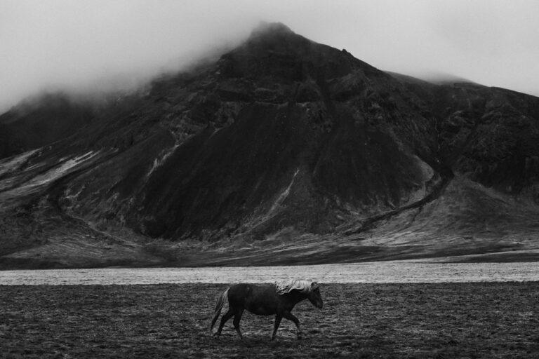 islandzki kon w gorach 29