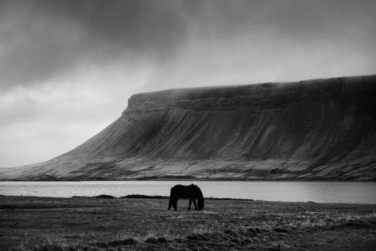kon w islandzkim krajobrazie 12
