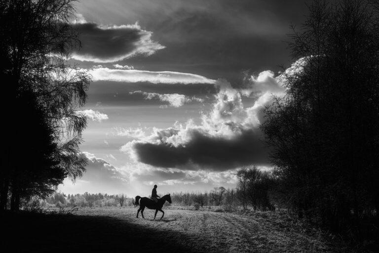 kon w krajobrazie 34