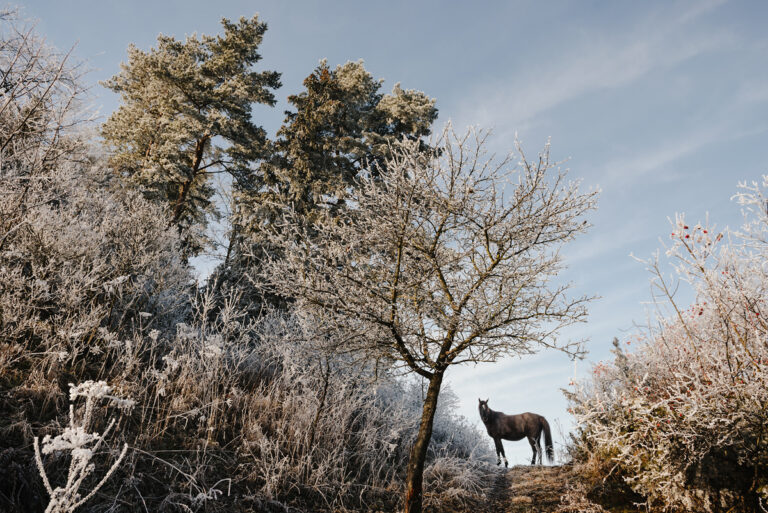 kon w krajobrazie 38