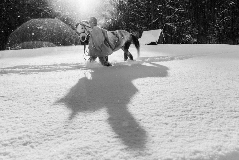kon w zimowej scenerii 08