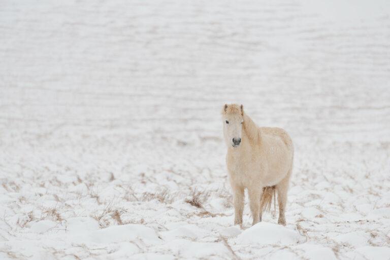 kon w zimowej szacie 16