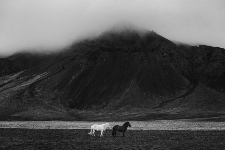 konie w gorach islandia 01