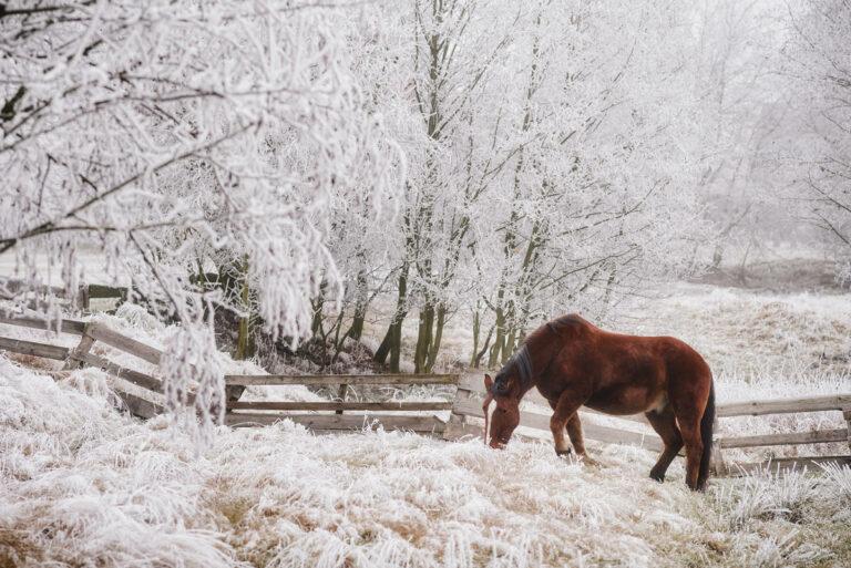 polskie konie 37