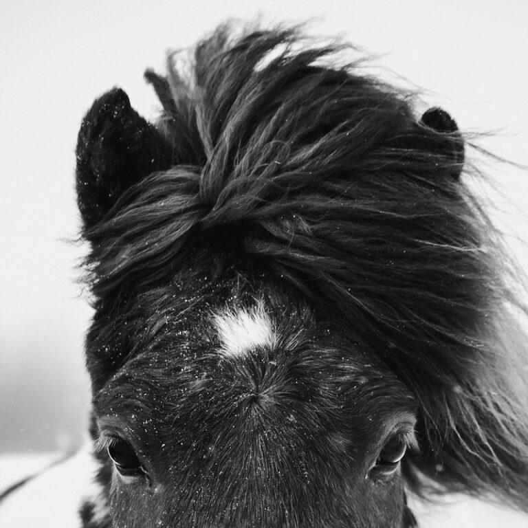 portret konia 07