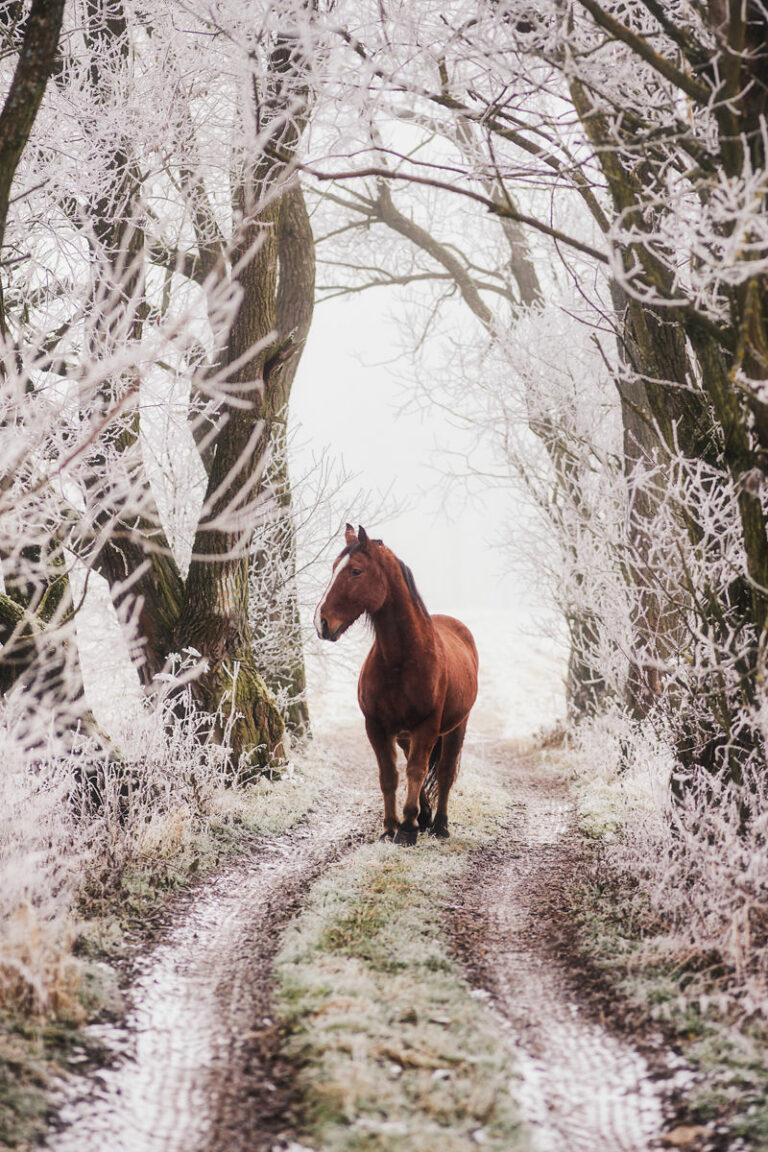 zdjecie konia w lesie 09