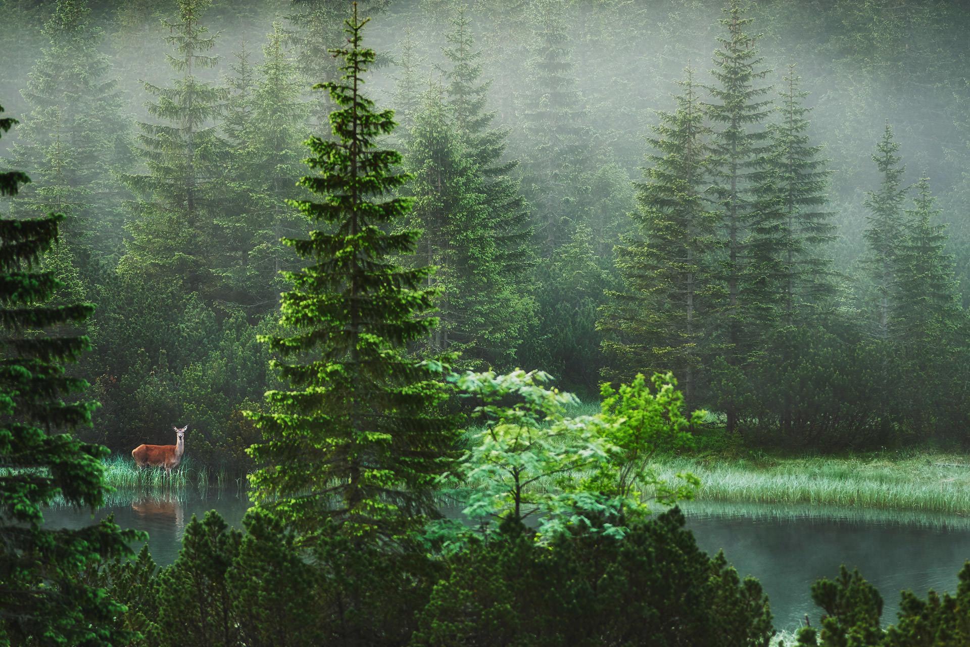 Tatrzanski Park Narodowy sarna zdjecia Tatr